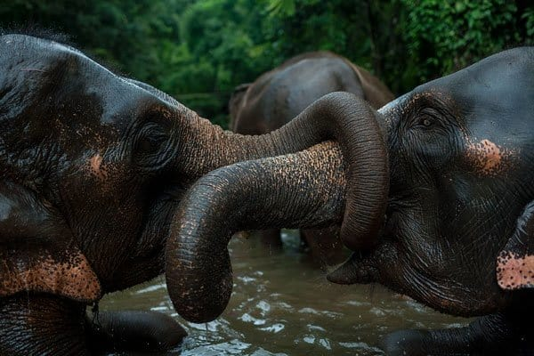 binhdang.me documentary mahout featured