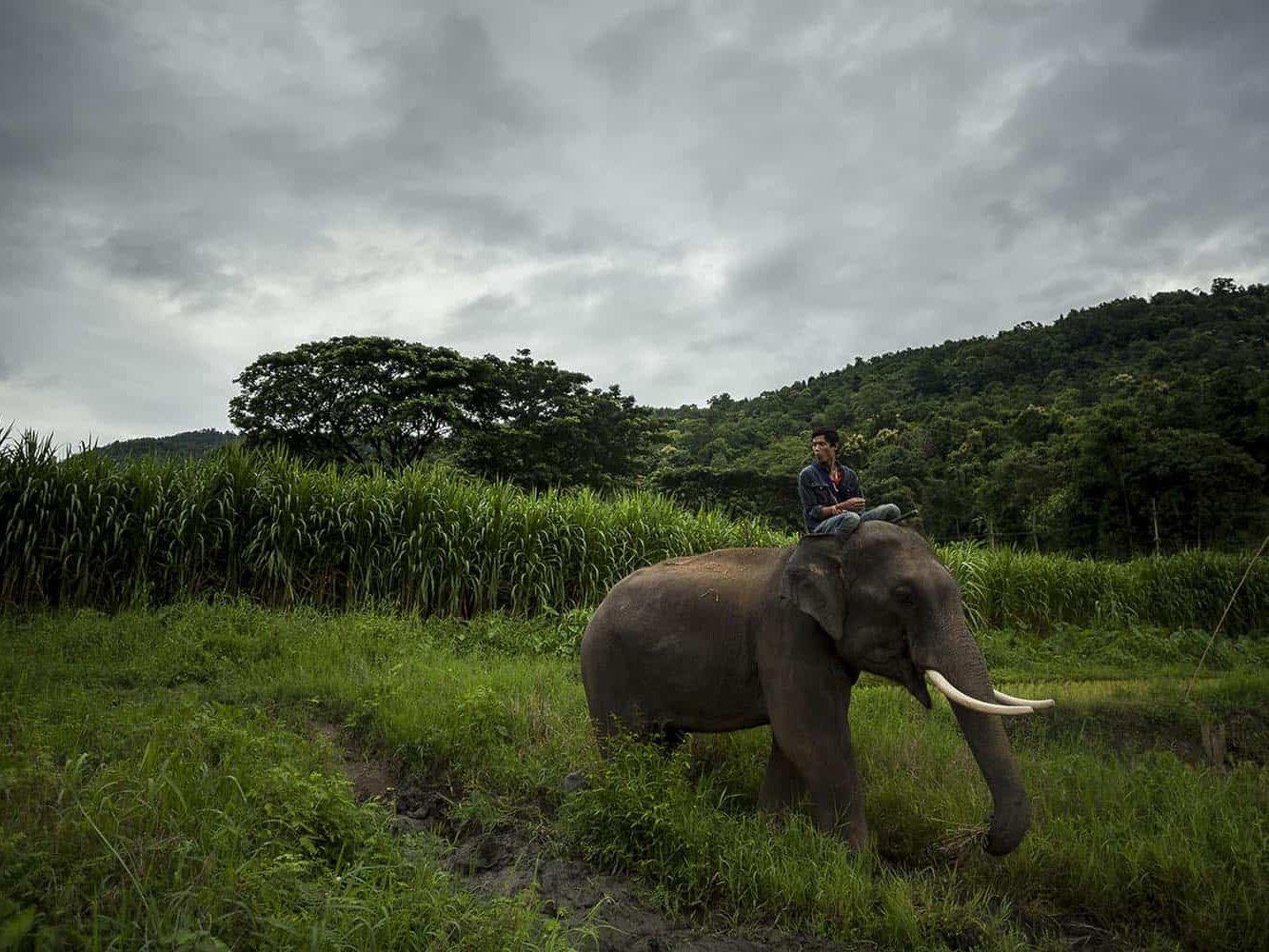 vietnam photographer mahout family binhdang 1