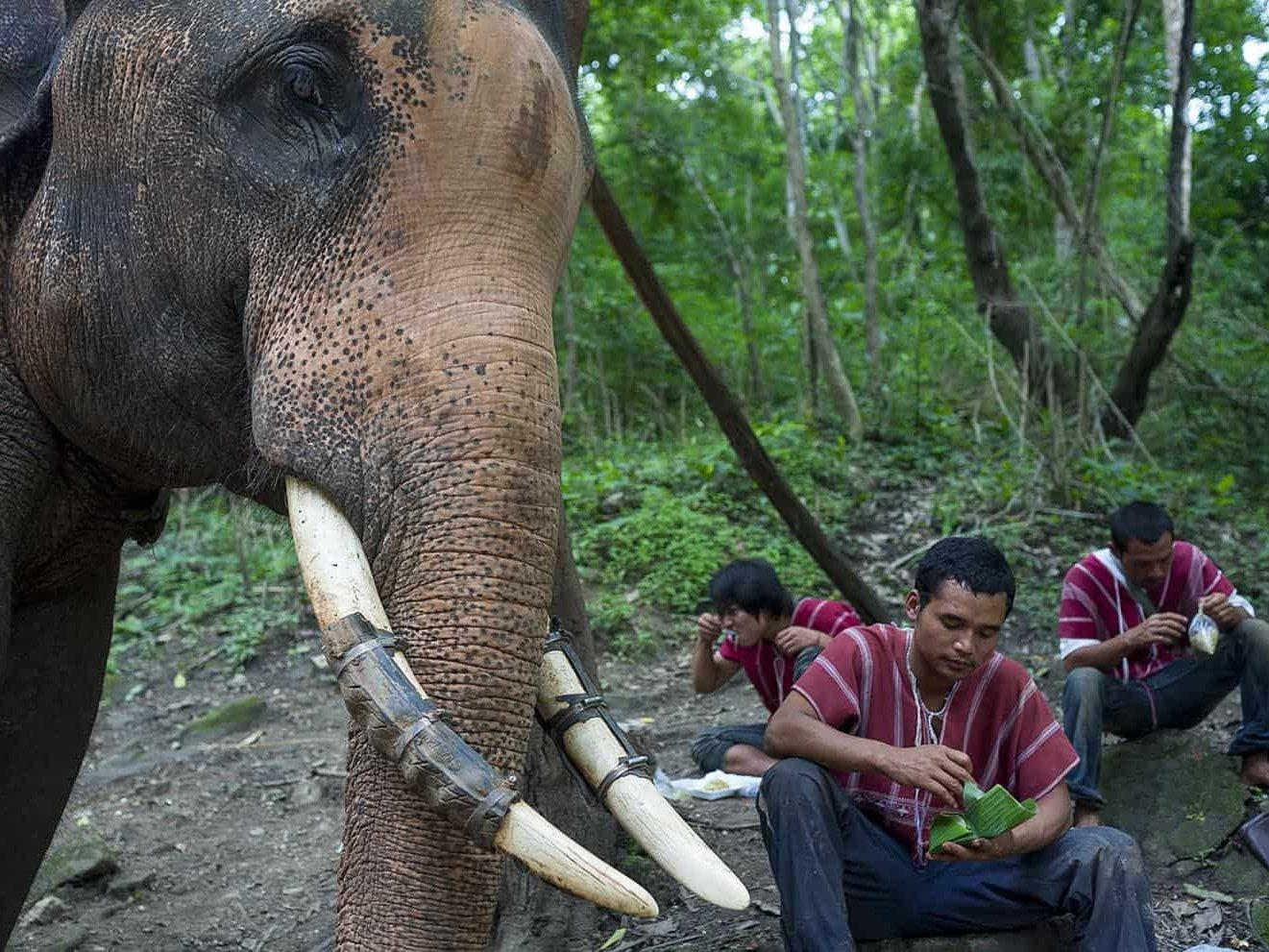 vietnam photographer mahout family binhdang 11