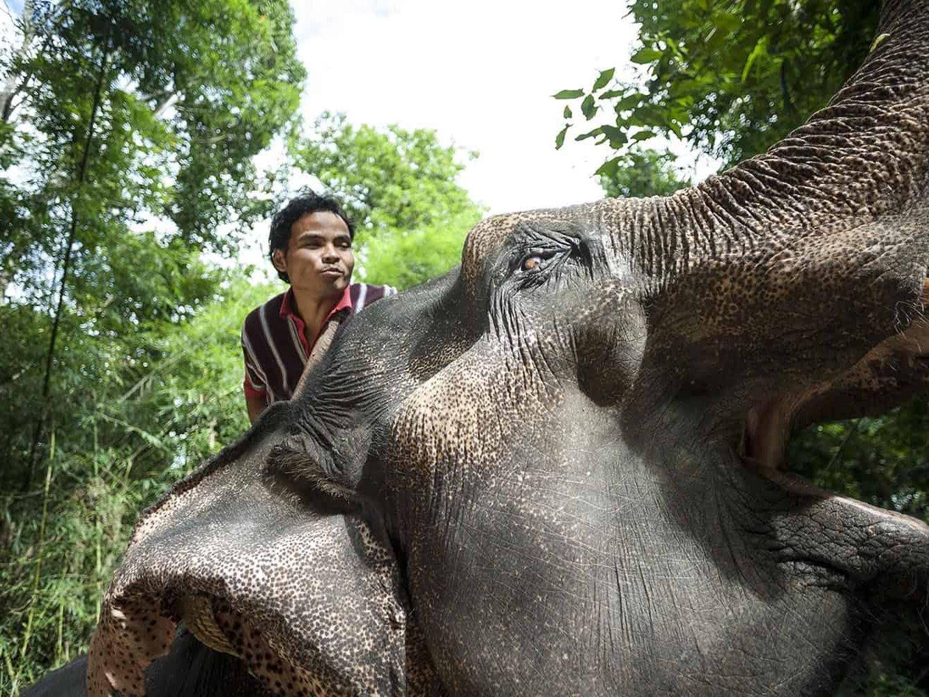 vietnam photographer mahout family binhdang 12