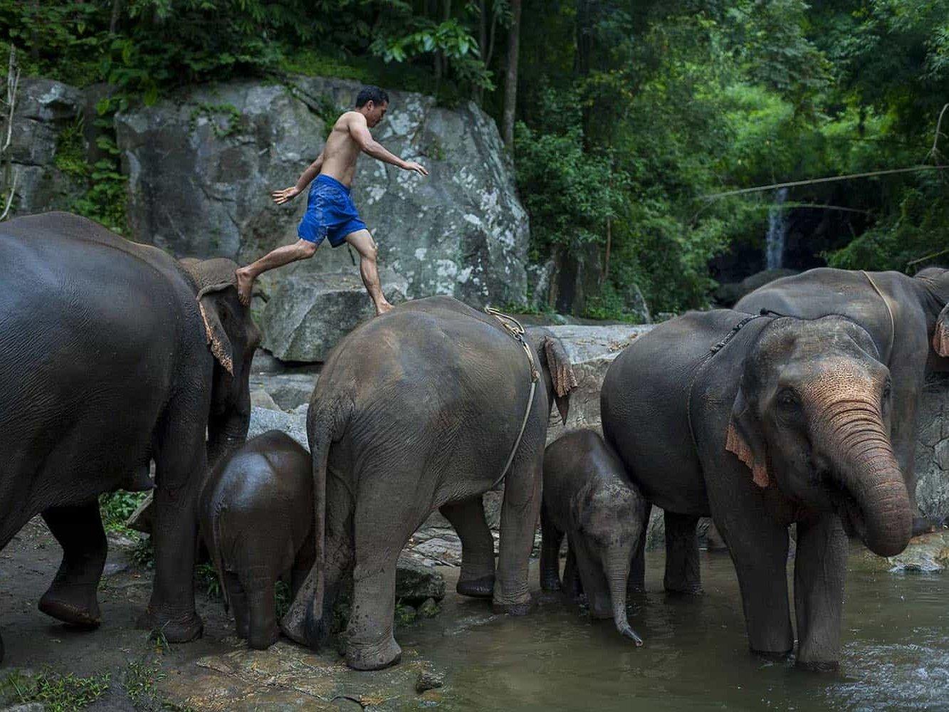 vietnam photographer mahout family binhdang 14