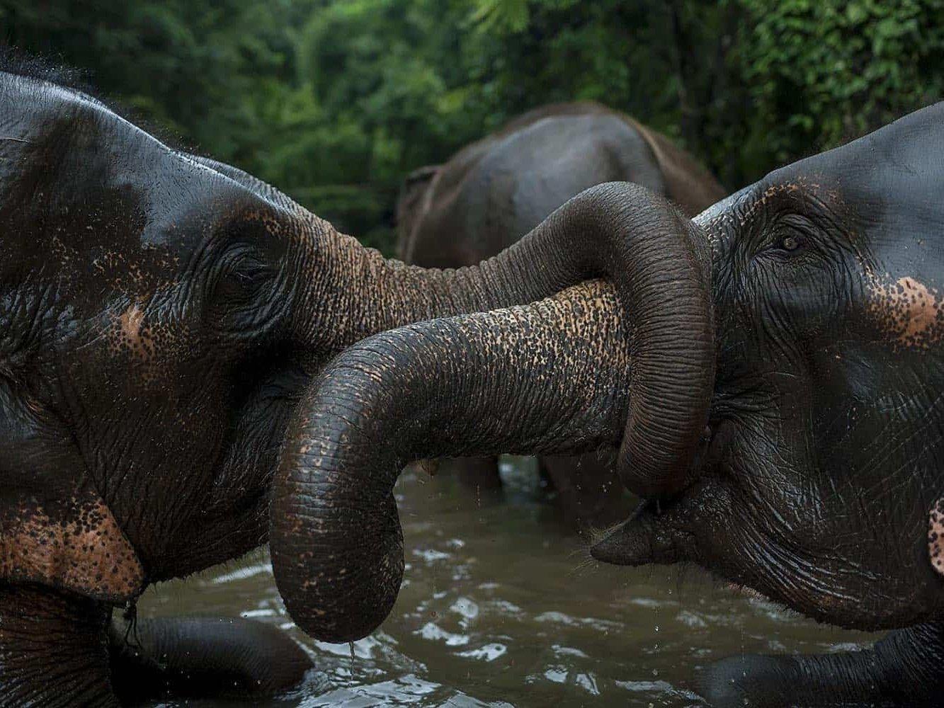 vietnam photographer mahout family binhdang 15