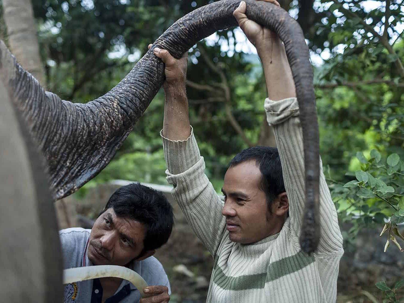 vietnam photographer mahout family binhdang 19