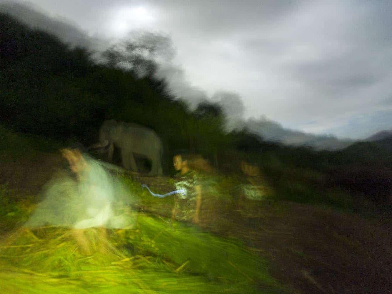 vietnam photographer mahout family binhdang 5