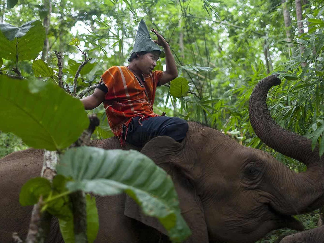 vietnam photographer mahout family binhdang 7