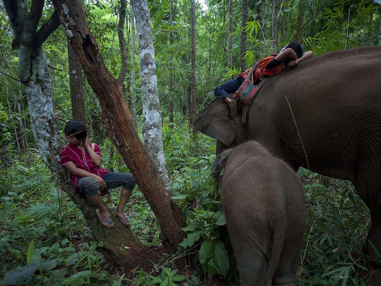 vietnam photographer mahout family binhdang 8