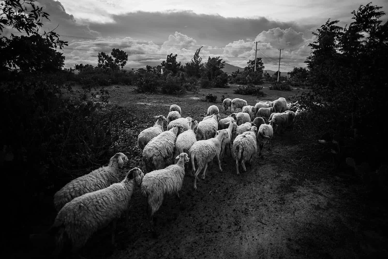 vietnam photographer travel landscape binhdang 10