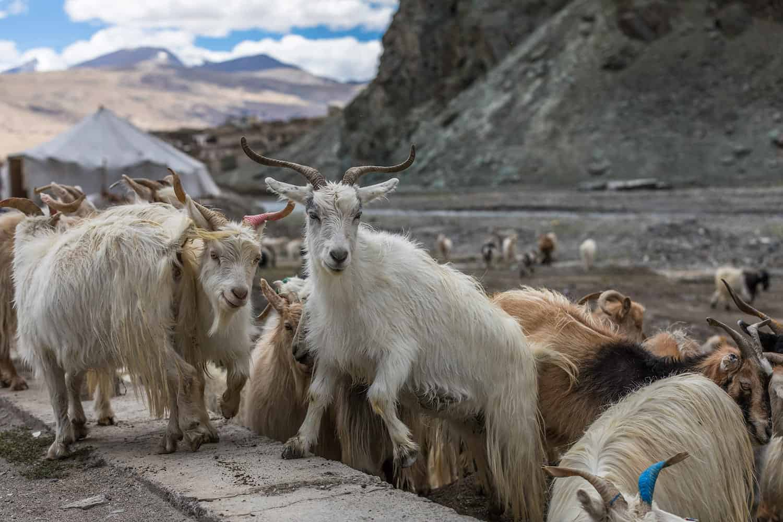 ladakh india binhdang travel photography10