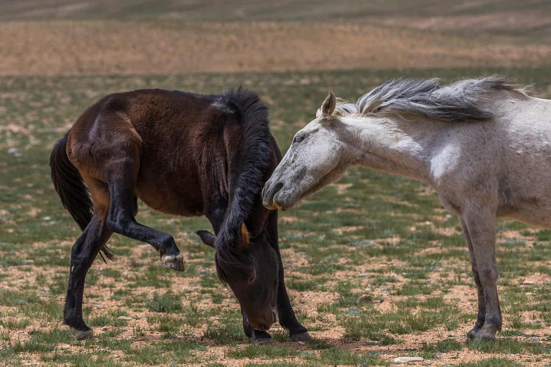 ladakh india binhdang travel photography13