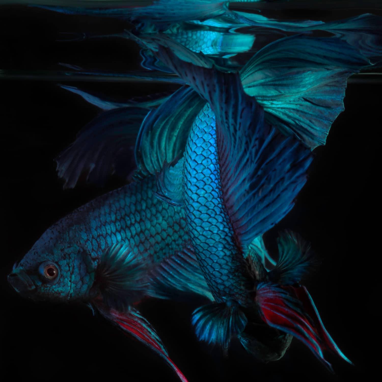 binhdang still fish 01