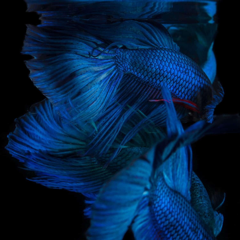 binhdang still fish 02