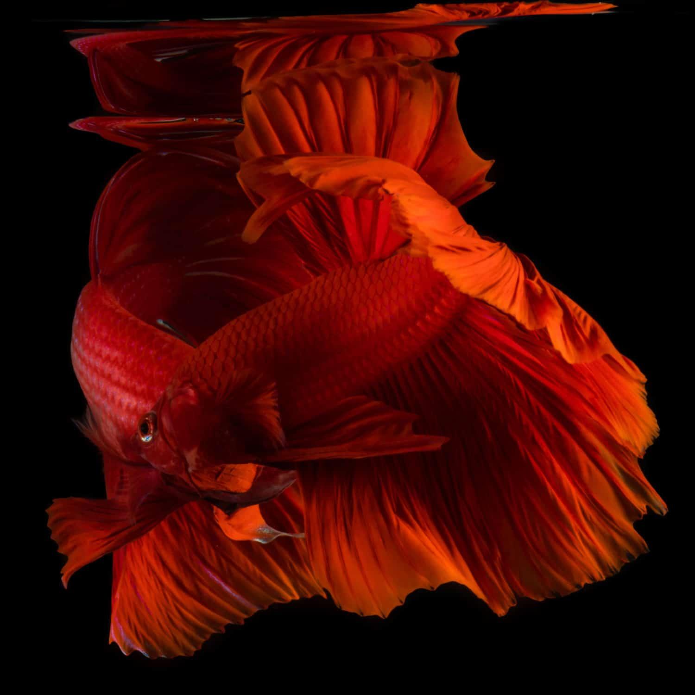 binhdang still fish 03