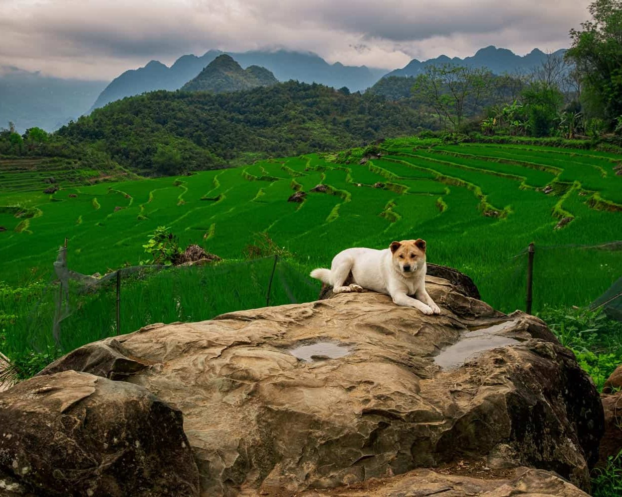 vietnam-travel-photography-high-moutain-vietnamese-photographer-binh-dang-dog
