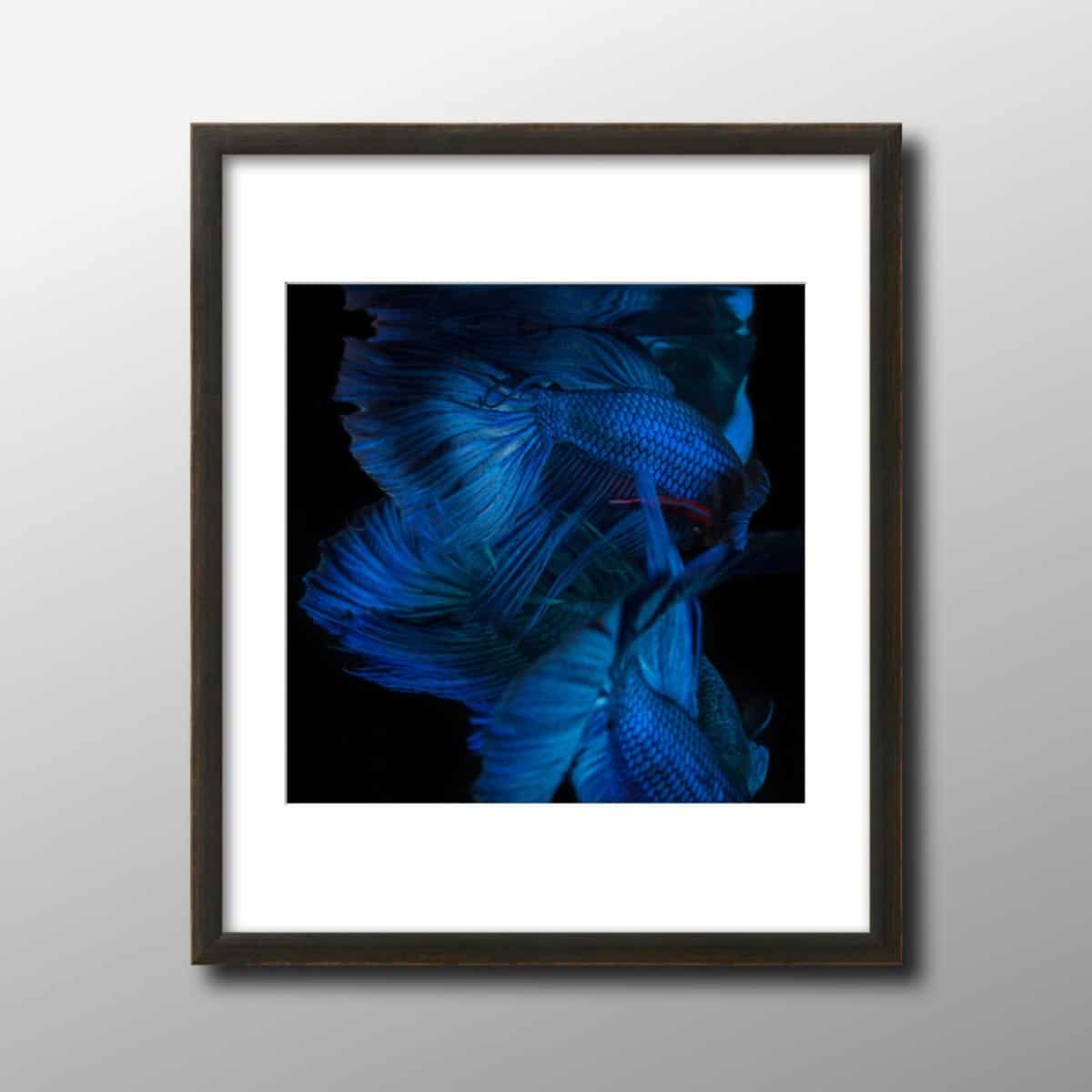 vietnam_hanoi_photography_blue_betta_still_life_binh_dang_1