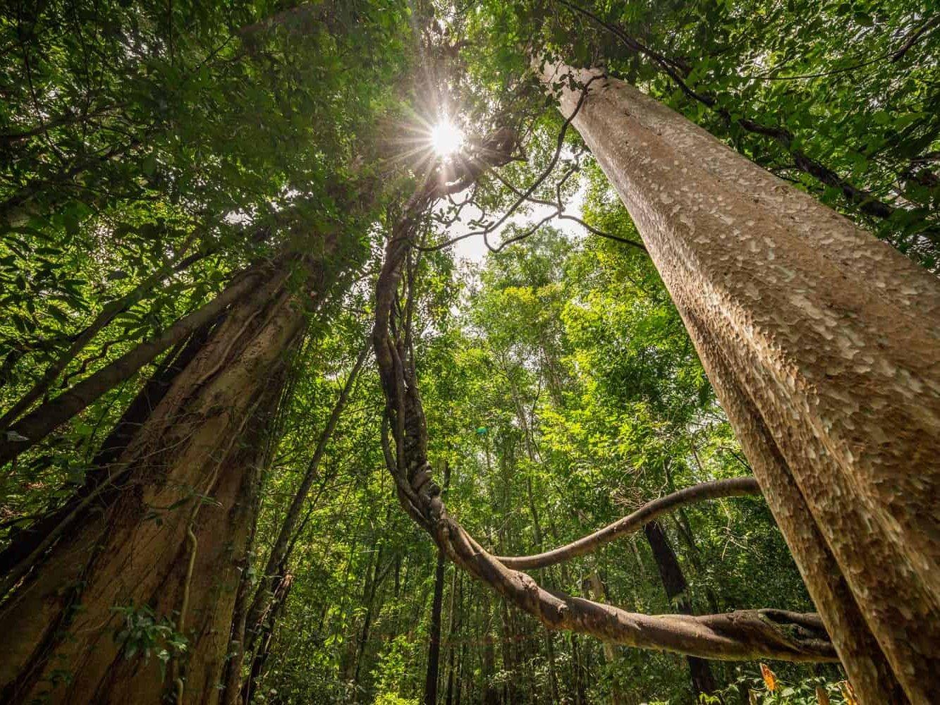 vietnam_landscape_photography_photographer_binh_dang_forest_hochinhminh